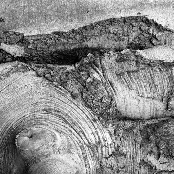 Photograph - Tree Textures 1 by Frank Mari