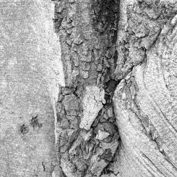 Photograph - Tree Textures 2 by Frank Mari