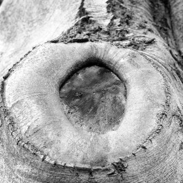 Photograph - Tree Textures 3 by Frank Mari