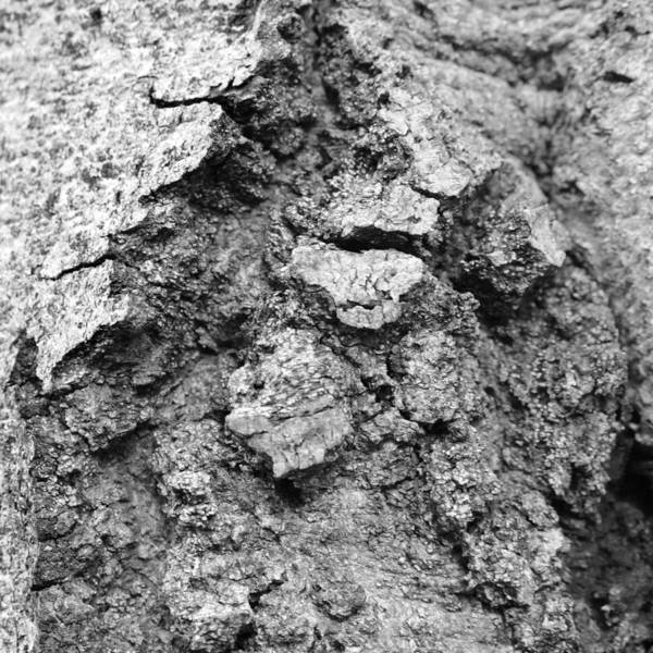 Photograph - Tree Textures 4 by Frank Mari