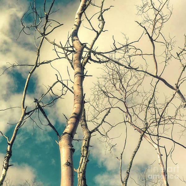 Leafless Tree Wall Art - Photograph - Tree Top 2 by Priska Wettstein