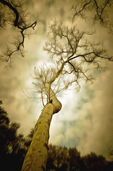 Painting - Tree Top In The Clouds by Barbara Snyder