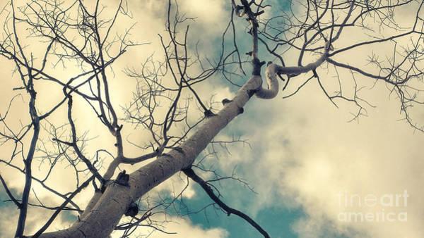 Leafless Tree Wall Art - Photograph - Tree Tops 1 by Priska Wettstein