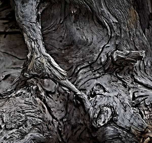 Photograph - Tree Trunk Abstract by Teresa Wilson