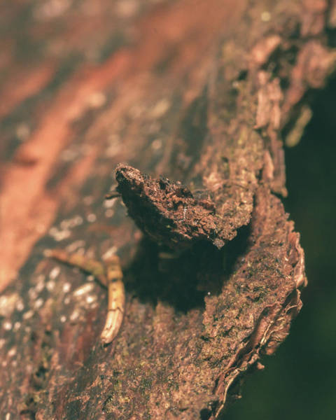 Photograph - Tree Trunk D by Jacek Wojnarowski