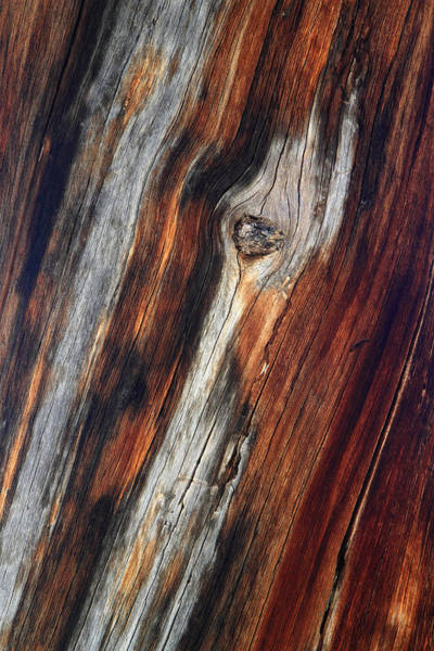 Photograph - Tree Trunk Design by Pierre Leclerc Photography