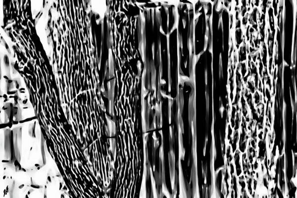 Photograph - Tree Trunks And Fencing by Gina O'Brien