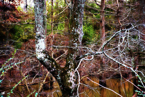 Photograph - Tree Trunks In Bayou Meto by Gina O'Brien