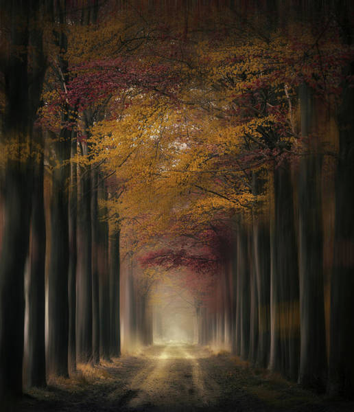 Photograph - Tree Tunnel Galore by Rob Visser