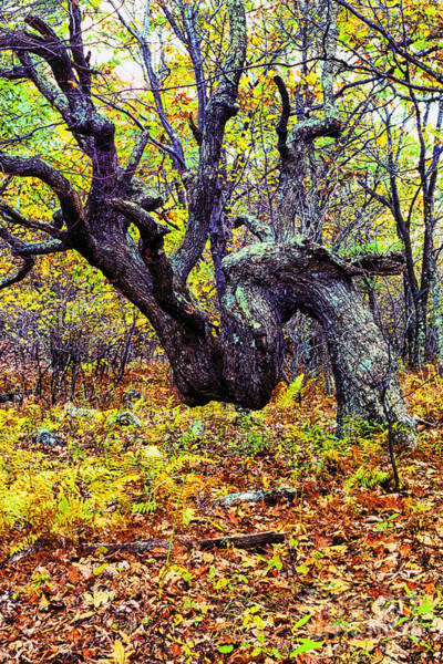 Photograph - Tree Twisted By Life by Thomas R Fletcher