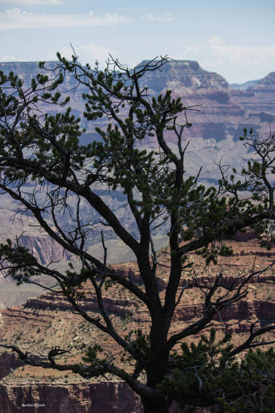 Photograph - Tree View Grand Canyon by Roberta Byram