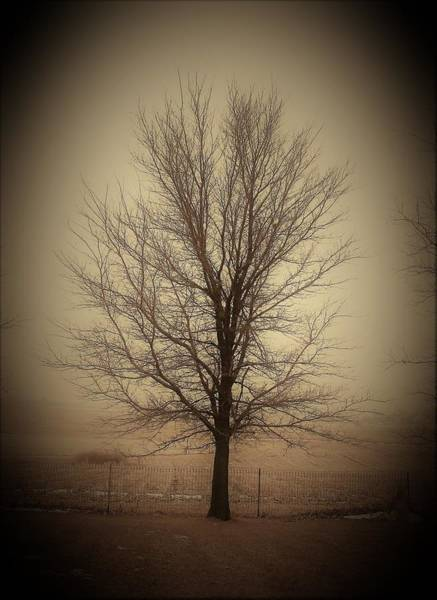 Wall Art - Photograph - Tree Vinette by Toni Grote