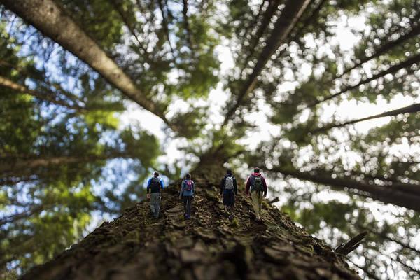 Digital Effect Photograph - Tree Walkers by Pelo Blanco Photo
