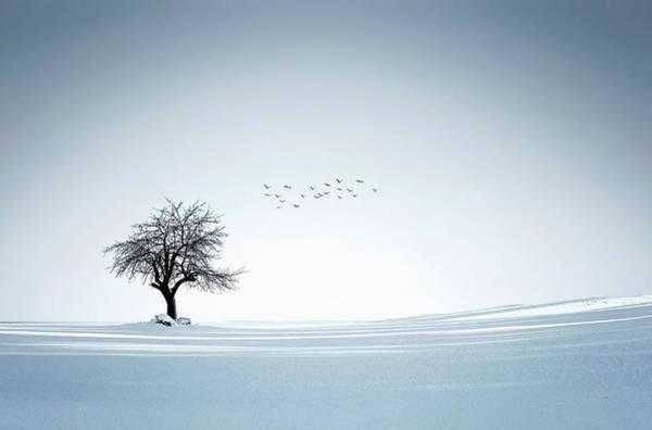 Wall Art - Photograph - Tree Winter by Bess Hamiti