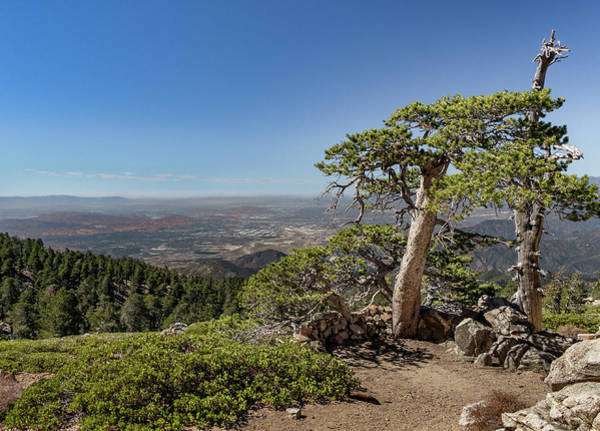 Photograph - Tree With A View by Ed Clark