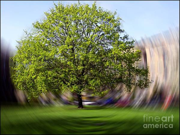 Photograph - Tree With Animated Surroundings by Sascha Meyer