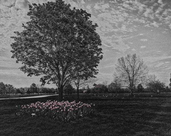 Wall Art - Photograph - Tree With Tulips #2 by Winnie Chrzanowski