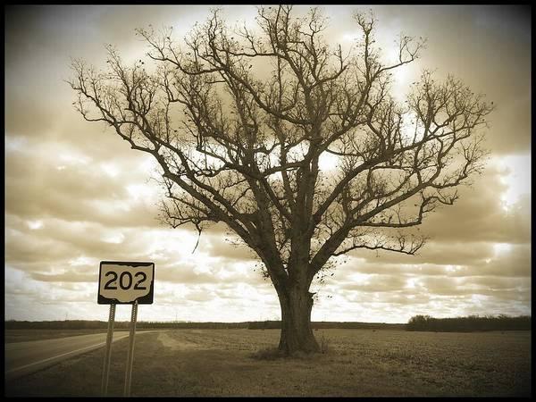 Wall Art - Photograph - Tree#202 by Michael L Kimble