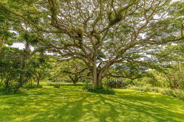 Photograph - Treebeard by Gary Felton