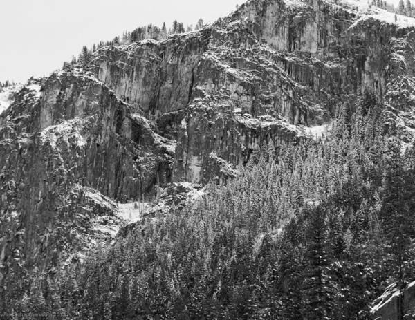 Photograph - Treefall by Lora Lee Chapman