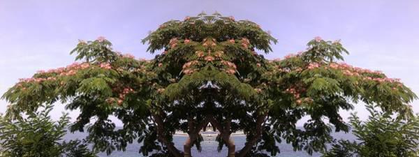 Photograph - Treegate Neos Marmaras by Julia Woodman