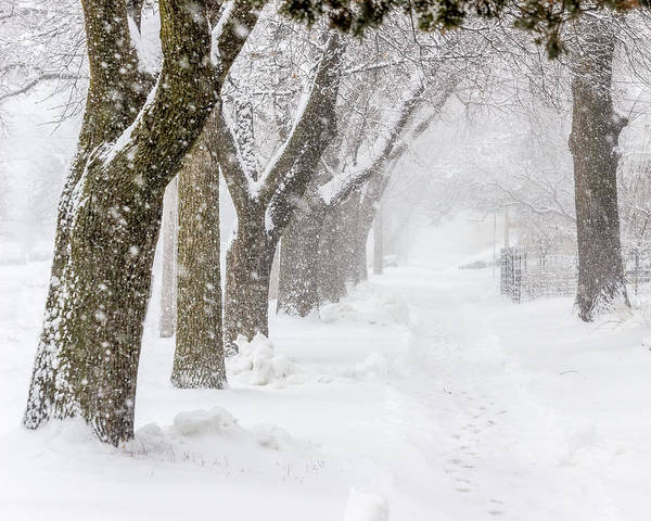 Photograph - Treelined Street During A Snow Storm by Pete Hendley