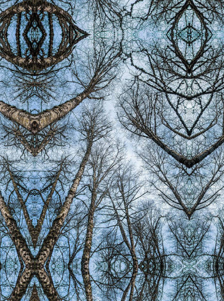 Photograph - Treenation by Robert Potts