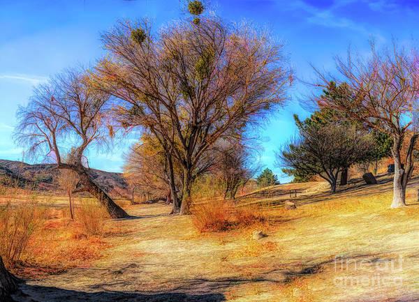Trees Along Elizabeth Lake Art Print