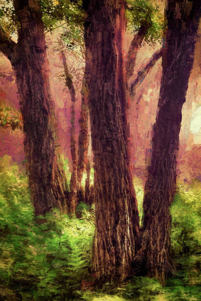 Wall Art - Painting - Trees And Ferns In The Blue Ridge Ap by Dan Carmichael
