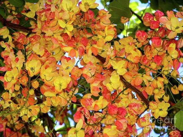 Trees And Flowers In Hawaii Art Print