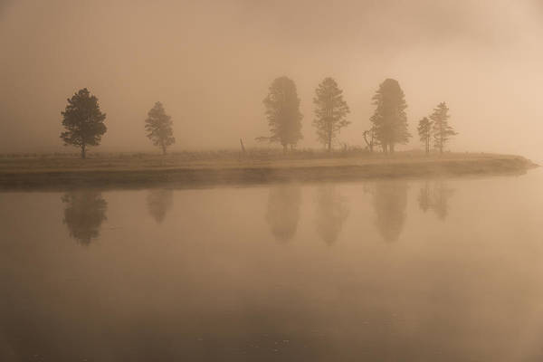Photograph - Trees And Fog by Gary Lengyel