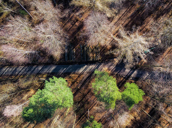 Photograph - Trees And Forest Path Aerial View by Matthias Hauser
