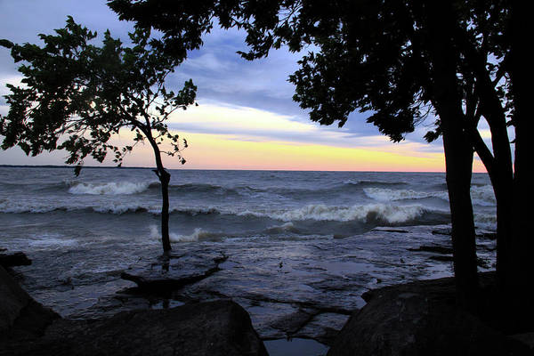 Photograph - Trees And Lake Erie by Angela Murdock