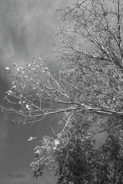Wall Art - Photograph - Trees And Light In Black And White by Brenda D Busskohl