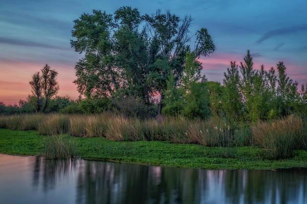 Trees And Marsh At Sunrise Art Print