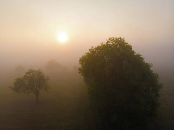 Photograph - Trees And Morning Fog At Sunrise by Matthias Hauser
