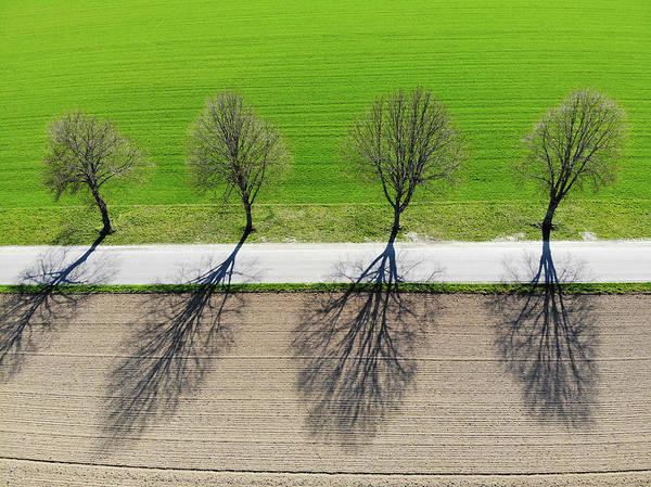 Photograph - Trees And Shadows Aerial View by Matthias Hauser