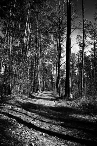 Photograph - Trees And Shadows by George Taylor