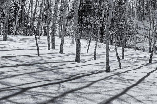 Photograph - Trees And Shadows by Tom Singleton
