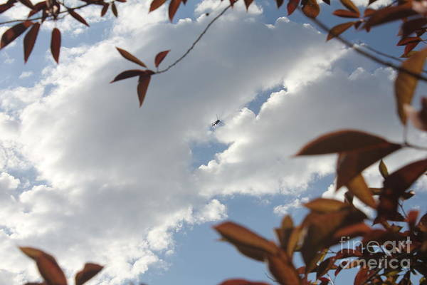 Photograph - Trees And Sky by Donna L Munro