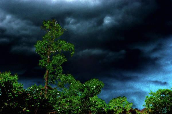 Photograph - Trees And Storm Clouds In Hdr by Gina O'Brien