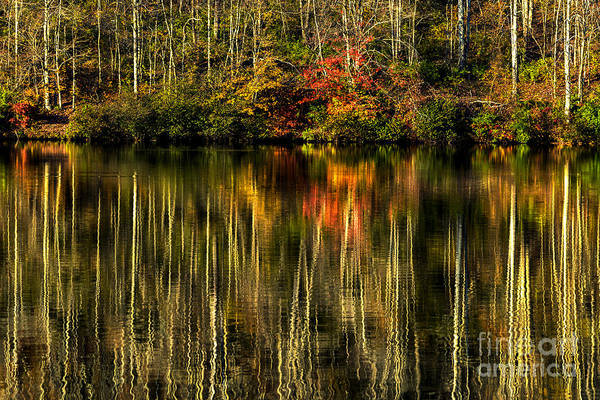 Photograph - Trees And Their Reflection by Thomas R Fletcher