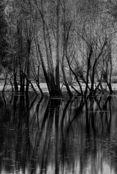 Wall Art - Photograph - Trees And Their Reflections On The Merced River by Jim Dohms