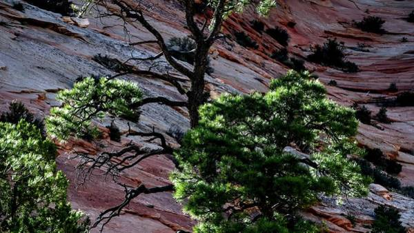 Photograph - Trees And Wall by Jerry Sodorff