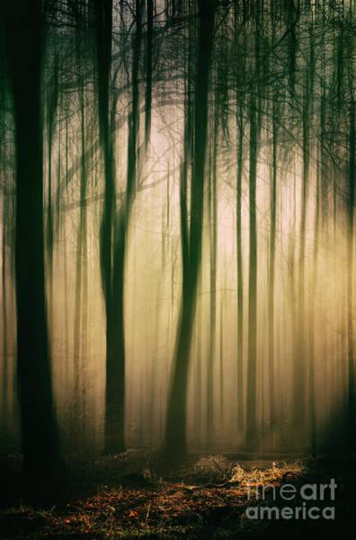 Photograph - Trees At Dawn by David Lichtneker