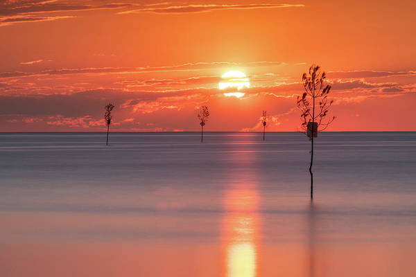 Wall Art - Photograph - Trees At Sea by Michael Blanchette