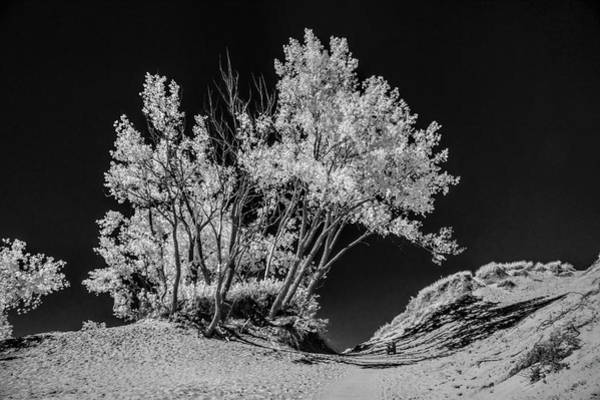 Photograph - Trees At Sleeping Bear Dunes National Lakeshore by Randall Nyhof