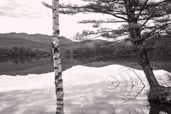 Photograph - Trees At The Lake by Nancy De Flon