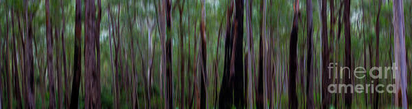 Wall Art - Photograph - Trees by Sheila Smart Fine Art Photography