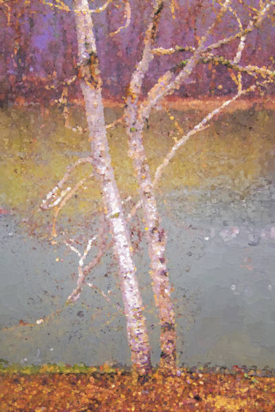 Photograph - Trees By The River by Tom Singleton